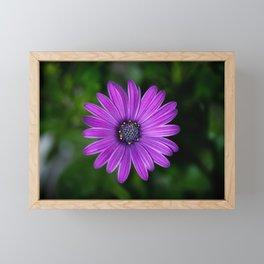 Frail in your garden Framed Mini Art Print