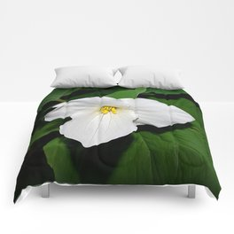 Trillium in the spotlight Comforters
