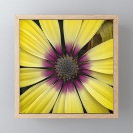 Yellow Calendula Framed Mini Art Print