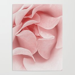 Pink flora Rose Bud- Roses and flowers Poster