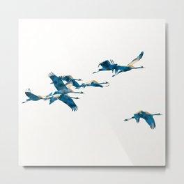 Beautiful Cranes in white background Metal Print