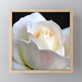 ROSE BUD Framed Mini Art Print
