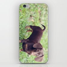Chocolate Anyone? iPhone & iPod Skin
