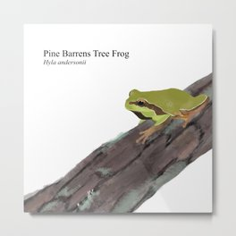 Pine Barrens Tree Frog (Hyla andersonii) on Pitch Pine Log Metal Print