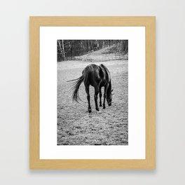 Broodmare Framed Art Print