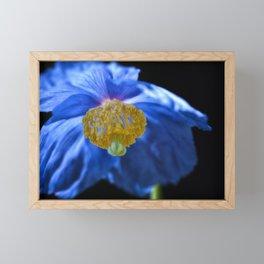 Blue Himalayan Framed Mini Art Print