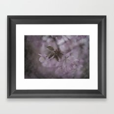 The first blossoms of spring Framed Art Print
