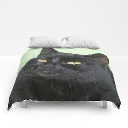 Relaxed Black Cat Portrait  Comforters