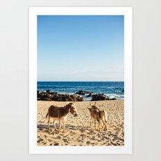 Donkeys on the beach Art Print