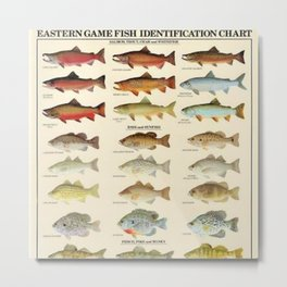 Illustrated Eastern Game Fish Identification Chart Metal Print