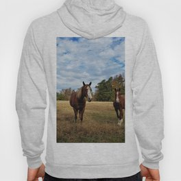 Two Horse Amigos in Pasture Hoody