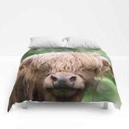 Portrait of a cute Scottish Highland Cattle Comforters