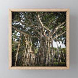 Banyan Tree at Bonnet House Framed Mini Art Print