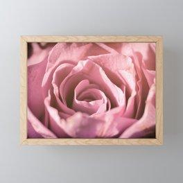 Pink Rose Macro Framed Mini Art Print
