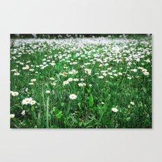 Daisy View Canvas Print