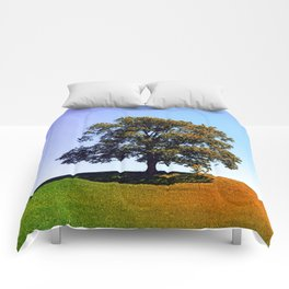 Posing tree on a hill in summertime Comforters