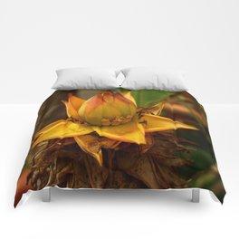Musella Lasiocarpa - A Drawf Banana Comforters