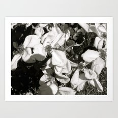 Places in Black & White: Sacramento 3 Art Print