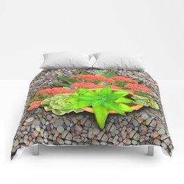 Flowering Crassula Perfoliata Comforters