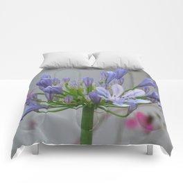 Agapanthus Comforters