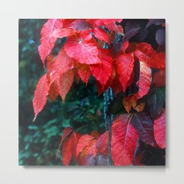 Vibrant Red Fall Leaves of Autumn Metal Print