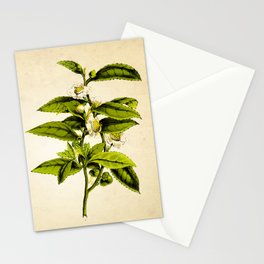 Tea Art Print, Kitchen Art Print, Natural History Poster, Natural History Botanical Art Print, Tea Tree, Tea Plant Art Print, Tea Leaves Art Stationery Cards