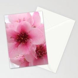Pink Peach Tree Blossom Stationery Cards