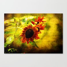 Sunflowers Lament Canvas Print