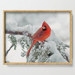 Cardinal on Snowy Branch (sq) Serving Tray