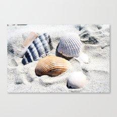 Shells in Charleston Canvas Print