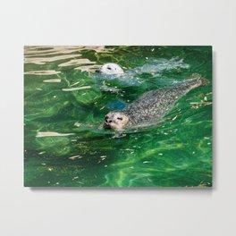 Seals Swimming In Emerald Waters Metal Print
