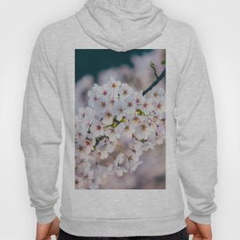 White Cherry Blossom On Branch Hoody