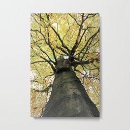 Treetop from Below Metal Print