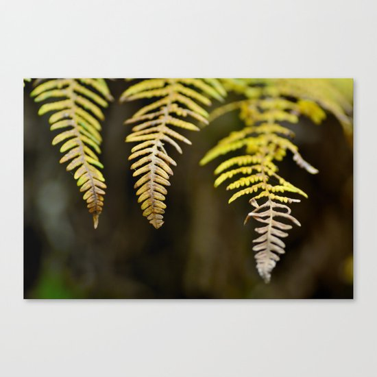 three ferns Canvas Print
