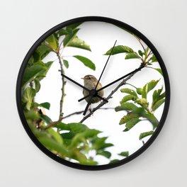 Wren Songbird Bird on a Branch (Troglodytes) Wall Clock
