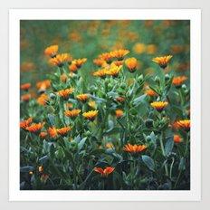 Orange Flowers #1 Art Print