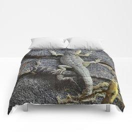 Desert lizards.... Comforters