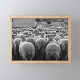 Sheep Framed Mini Art Print
