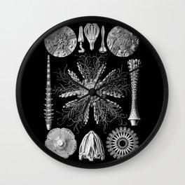 Sand Dollars (Echinidea) by Ernst Haeckel Wall Clock