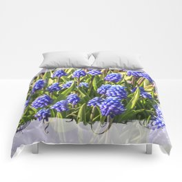 Grape hyacinths muscari Comforters