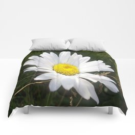 Close Up of a Margarite Daisy Flower Comforters
