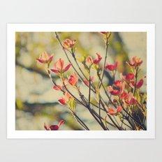 Vintage Red Dogwood Tree Flowers in Spring Warm Sunny Botanical Art Print
