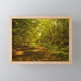 Woodland Views. Framed Mini Art Print