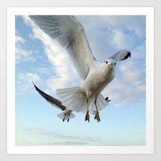 Gull Closeup Art Print