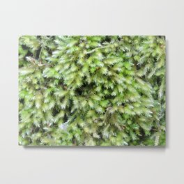 TEXTURES -- Moss on a Tree Trunk Metal Print