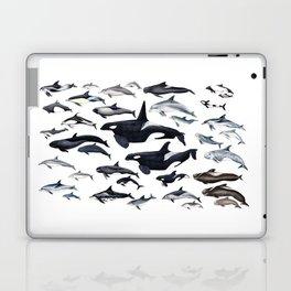 Dolphin diversity Laptop & iPad Skin