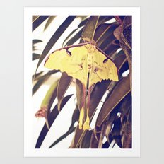 Yellow Flutterby Art Print
