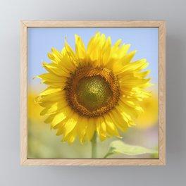 Sunflower - Flower, Floral, Nature Photography Framed Mini Art Print