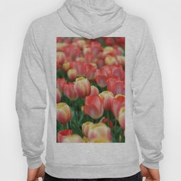 Colorful Yellow and Red Tulips in Spring Hoody