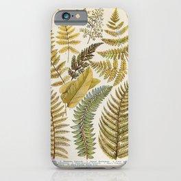Vinatge Fern Illustration iPhone Case